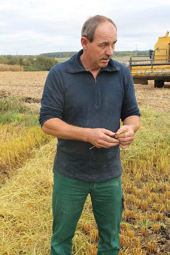 Quid de la culture du riz dans la plaine de l'Orbe?