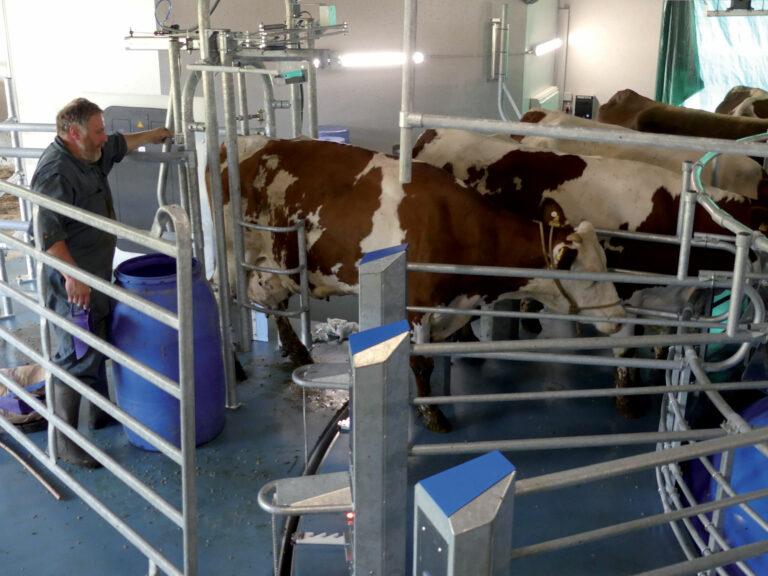 Naissance d'une ferme laitière