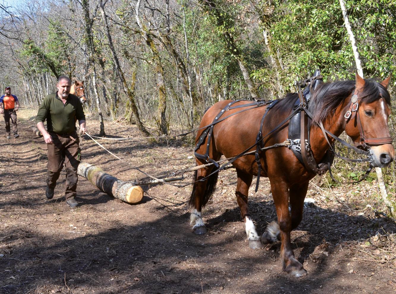 En faveur de la Biodiversité : Belle complicité homme – cheval