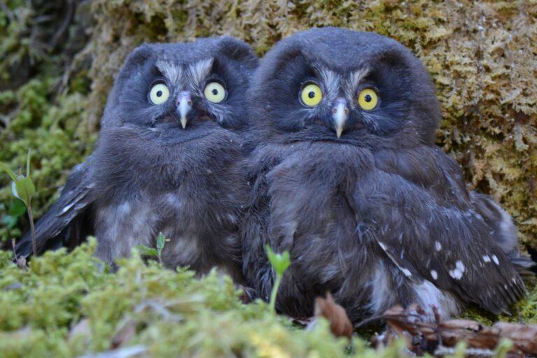 Oiseaux du Nord vaudois – En direct des nichoirs : sécheresse, promeneurs, … qu'en pensent les oiseaux ?