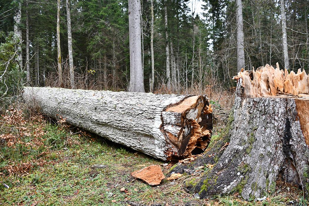 Mort d'un roi des forêts : Une vie peu ordinaire